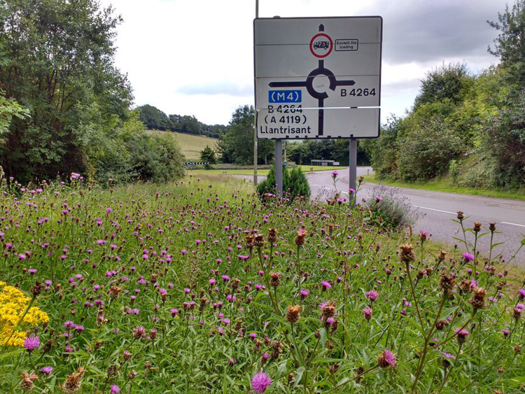 Wildflower verges in RCT by Liam Olds