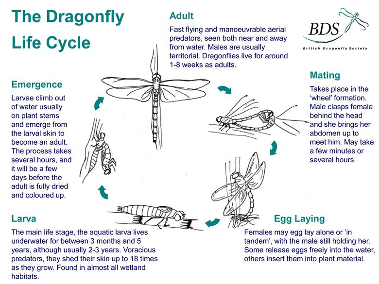 Wales Biodiversity Partnership - Dragonflies & Damselflies