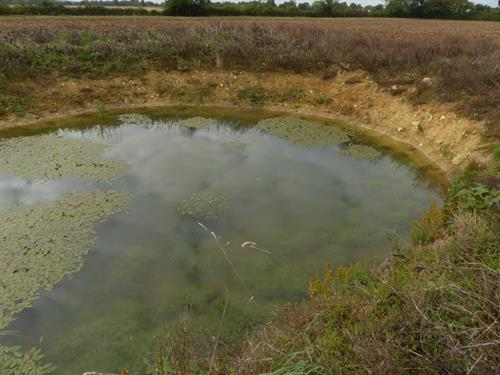Ghost Pond site at Guestwick showing plant colonisation