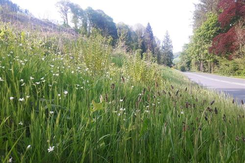Road verge Builth Wells - S McHugh